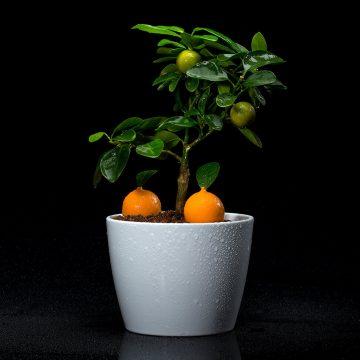 """Sim. É uma sobremesa. Ou melhor, uma pré-sobremesa, e um dos pratos assinatura do chef João Oliveira, que o acompanha desde que chegou ao Vista há seis anos. """"Uma homenagem ao Algarve e às suas famosas laranjas"""", a ideia é que o cliente colha a sua própria laranja da mini árvore e que a prove em várias formas: gel, mousse, caramelo, pão e até sumo texturizado. Curioso? Peça-a na próxima vez que estiver por Portimão. As mini árvores que o chef usa na apresentação desta pré-sobremesa são produzidas pela empresa local Citrina www.citrina-plants.com"""