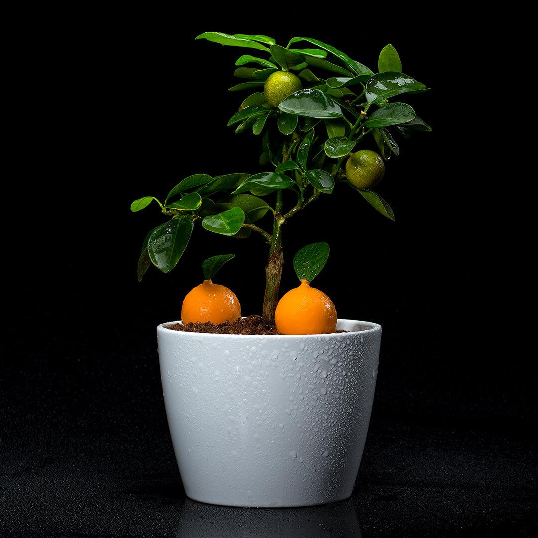 As laranjas do Algarve